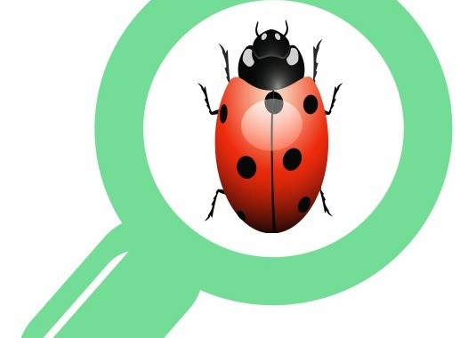 Report a BUG in Effective Way…